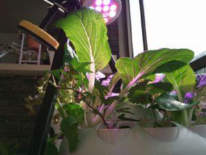 לגדל צמחים בבית עם תאורה מלאכותית לצמחים