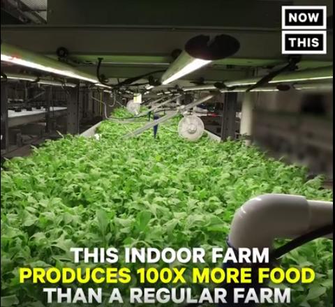 חקלאות הידרופונית עירונית