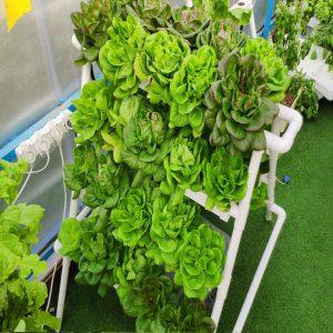 תמונת מוצר של מערכת הידרופונית לגידול 40 צמחים בשיטת NFT