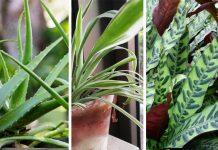 כתבה על צמחי בית