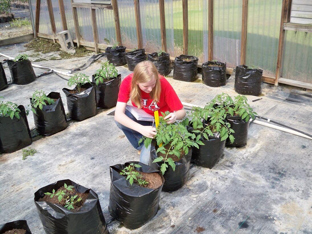 הידרופוניקה בבית ספר - לימודי חקלאות עירונית