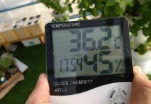 התמודדות עם הקיץ בגידול הידרופוני