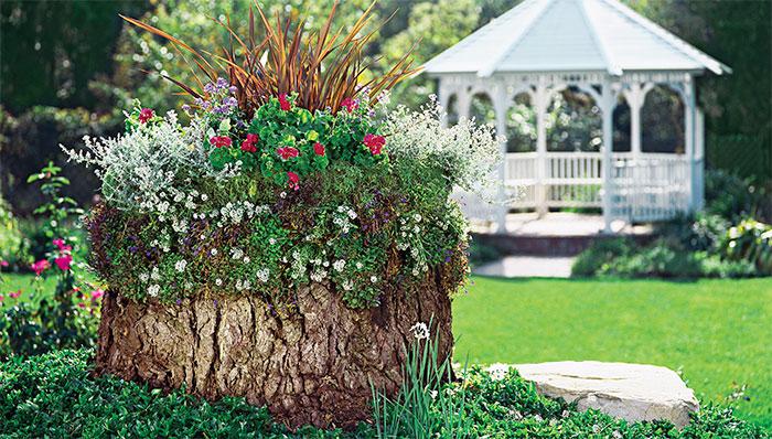 גינת פרחים על גדם עץ