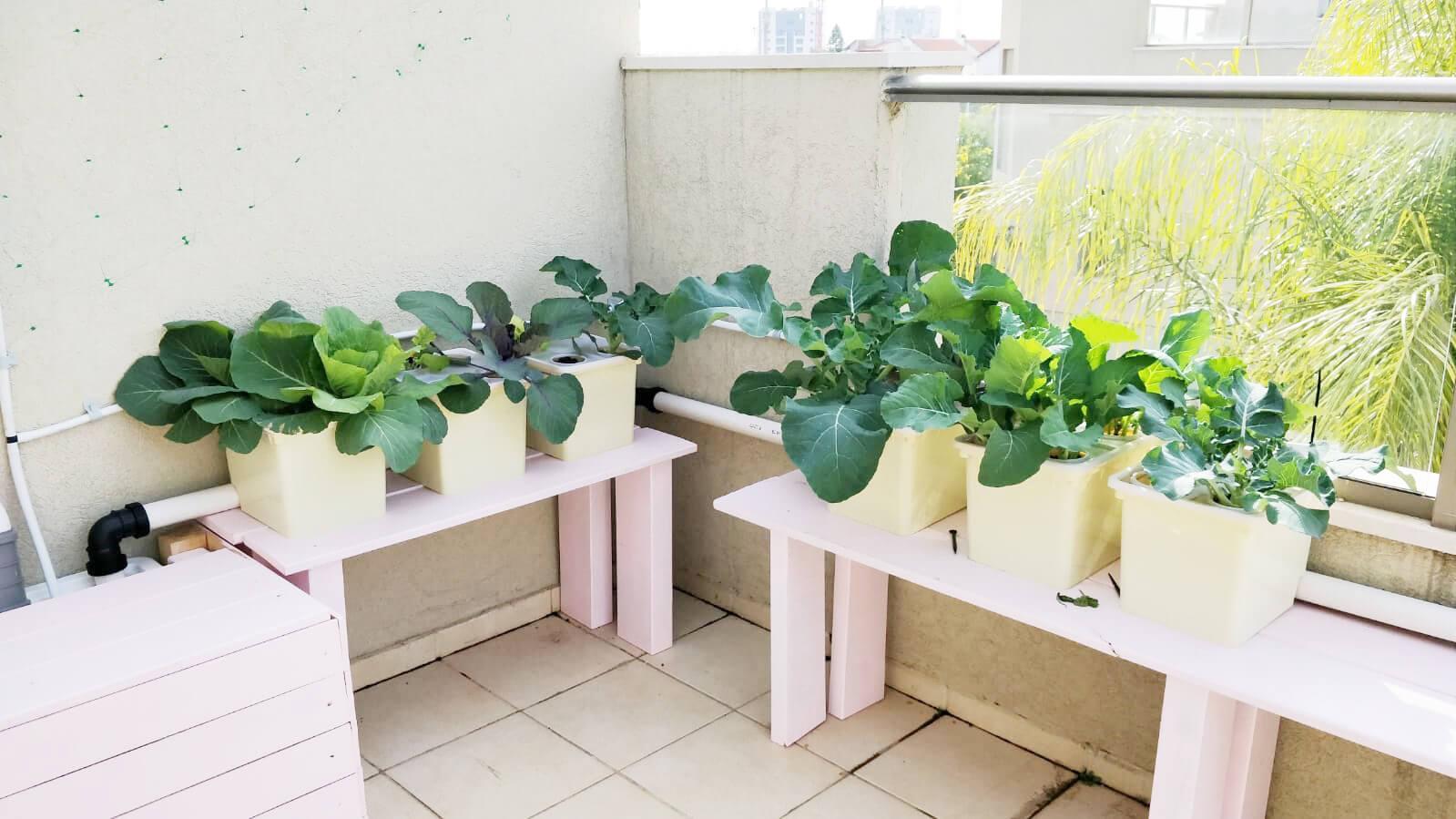 דליים הולנדים הידרופונים לגידול ירקות גדולים